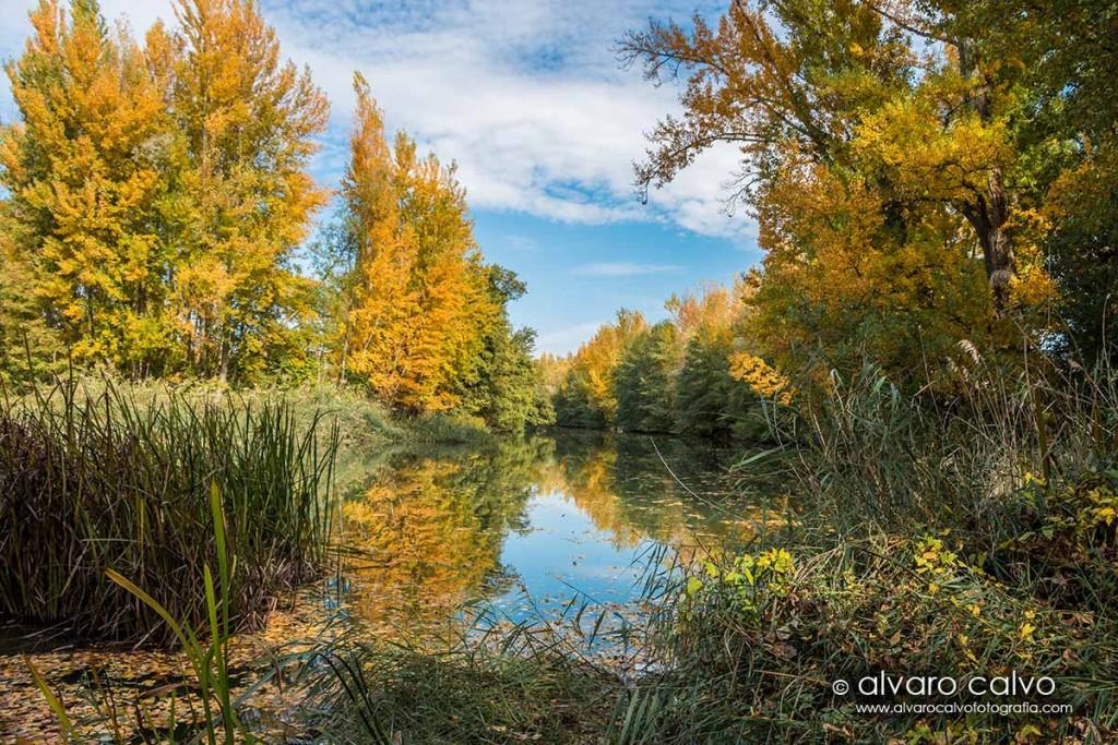 Ribera del río en otoño