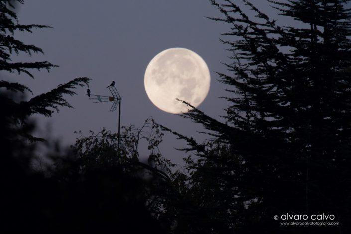 Luna de amanecer