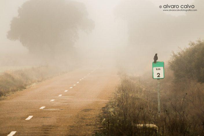 Cuervo en medio de la niebla