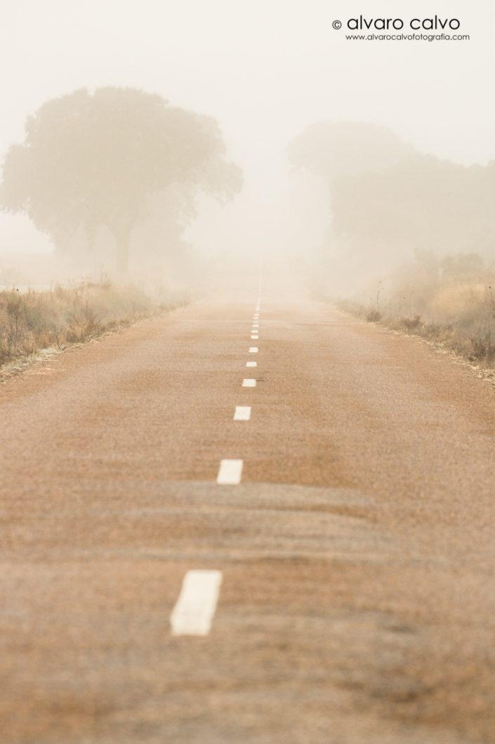 Niebla castellana y carretera