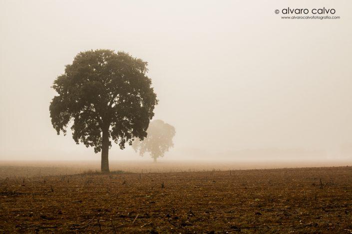 Niebla castellana