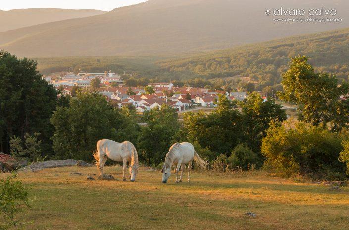 Caballos en Covaleda (Soria)