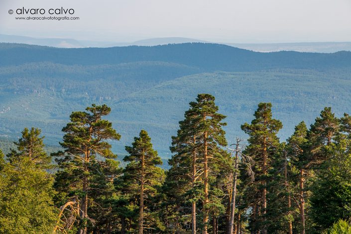 Bosques hasta donde alcanza la vista